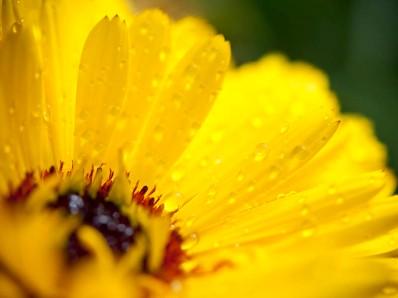 close_up3